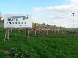 Bute Produce-web